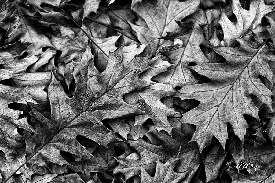 Les feuilles mortes - Claude Gagné