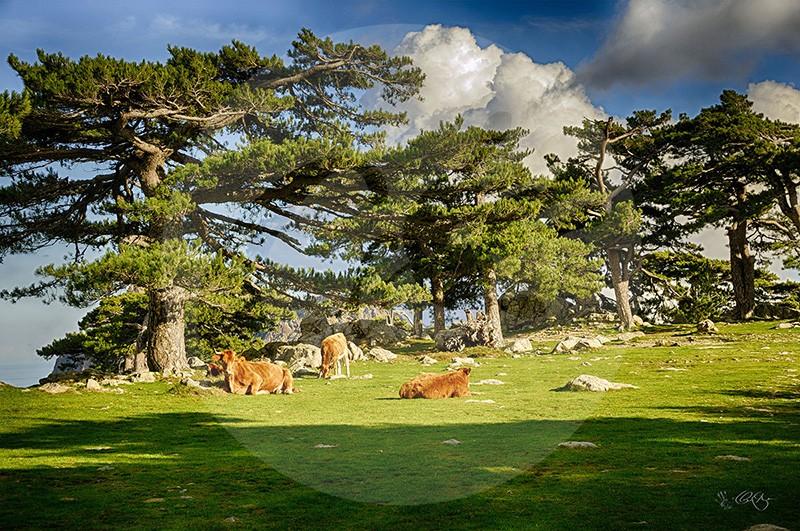 Forêt des Aiguilles de Bavella