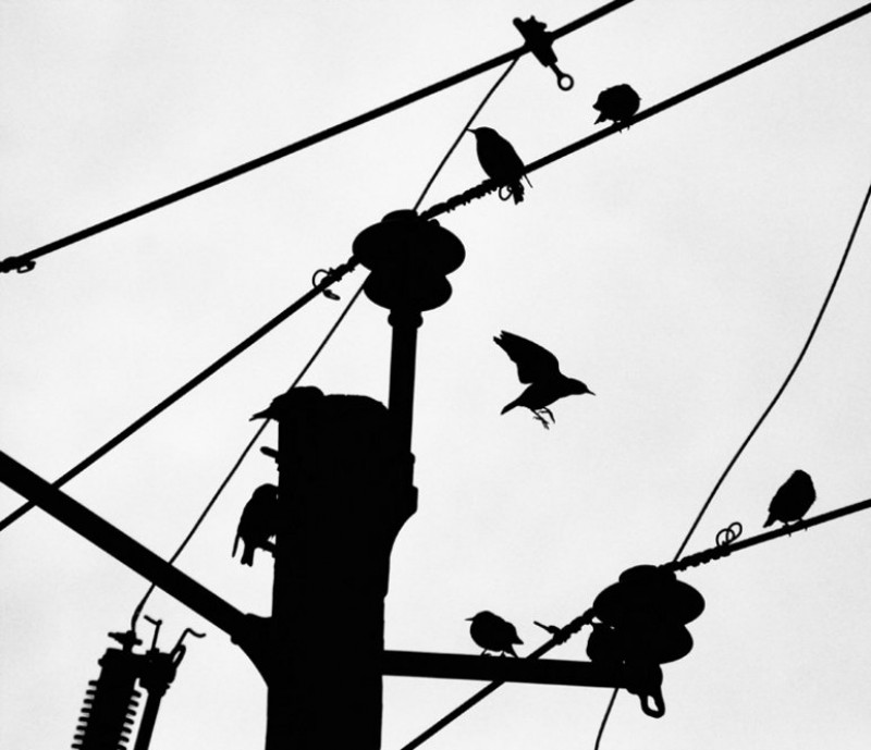 _birds_on_a_wire_